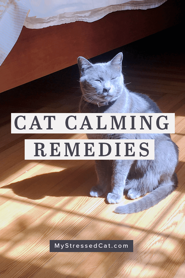 7 cat calming remedies you can buy off the shelf