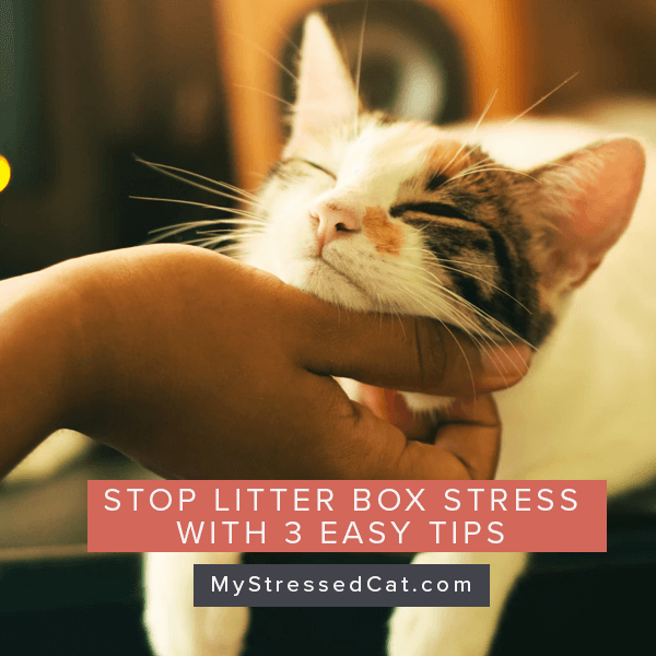 3 easy tips to stop litter box stress