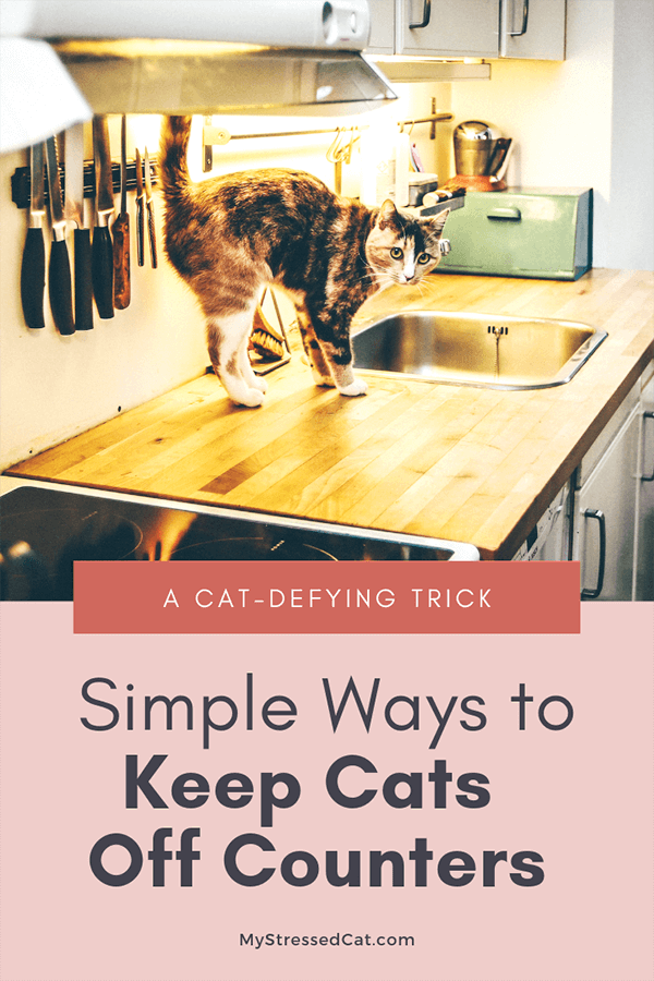 simple ways to keep your cat off the counter