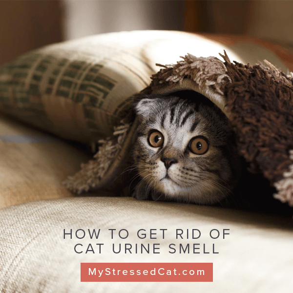 How To Get Rid Of Cat Urine Smell 3 Remarkably Easy Tips
