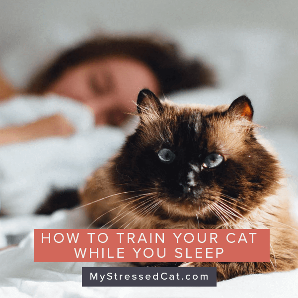 How to train your cat while you sleep