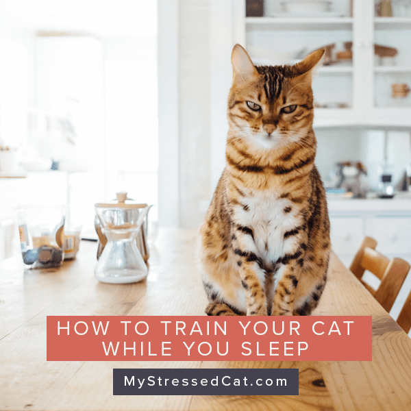 How to train your cat while you sle