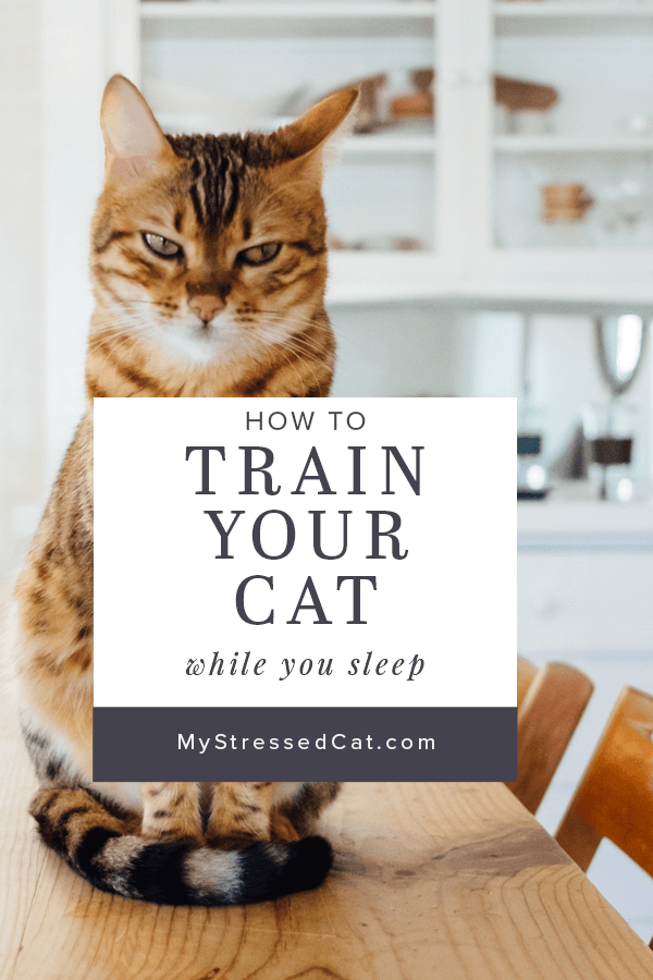 how to train your cat while you sleep #mystressedcat
