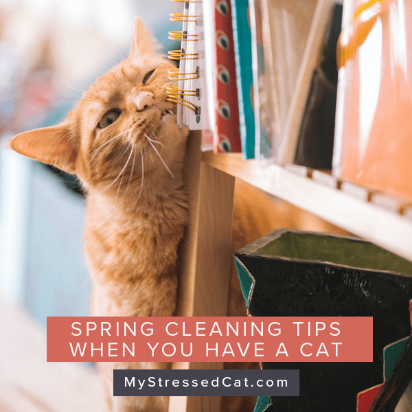 3 Stress-free Spring Cleaning Tips for You and Your Cat