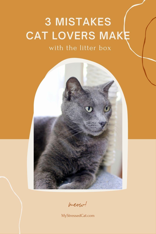 3 litter box mistakes cat parents make