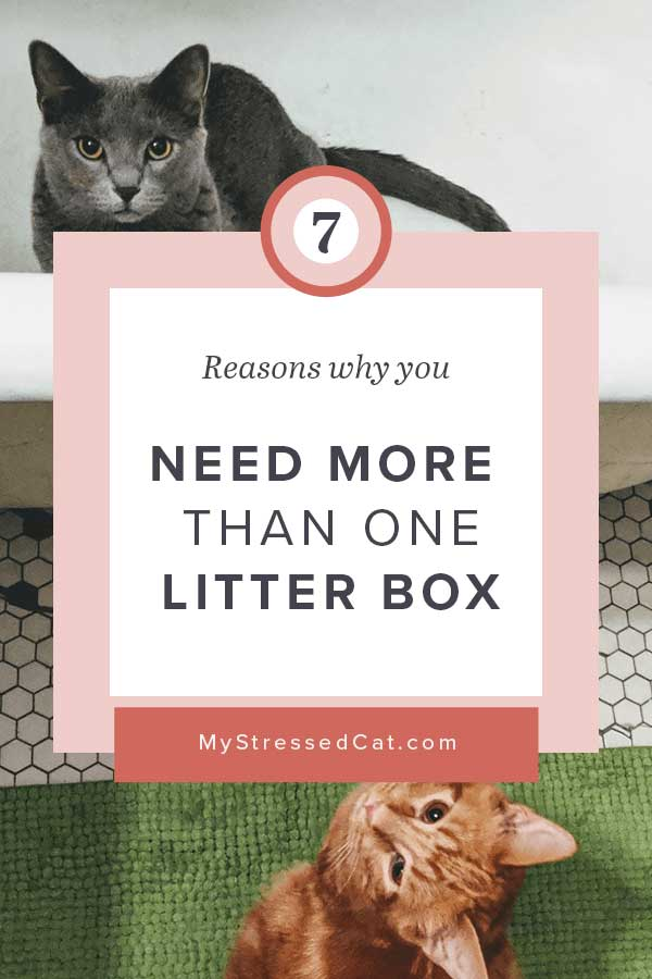 7 reasons why you need multiple litter boxes