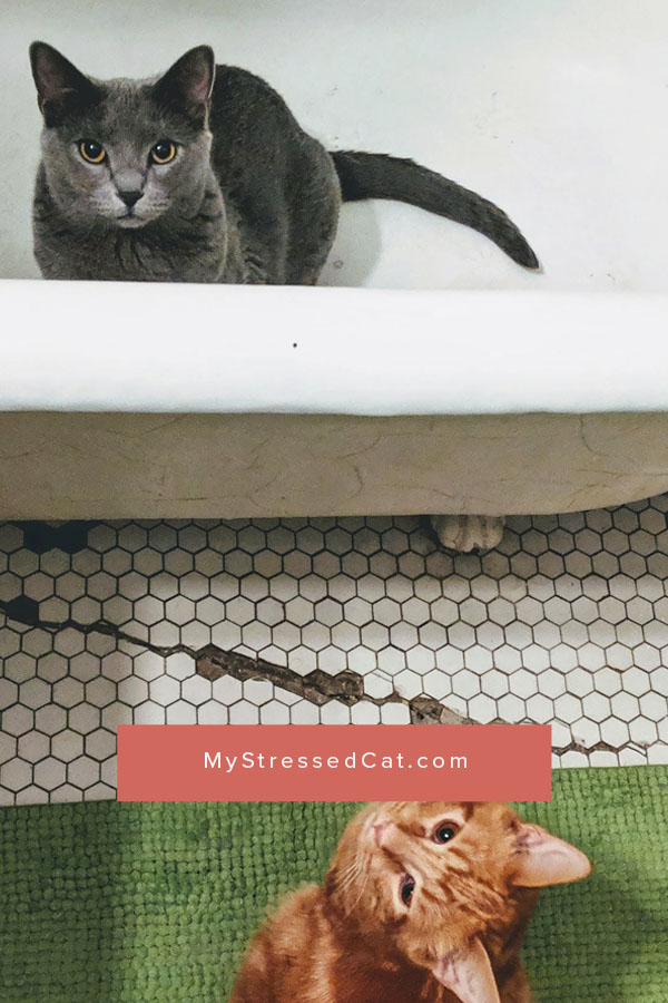 7 Reasons Why You Should Have More Than One Litter Box