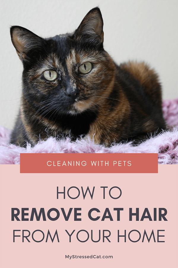 remove cat hair
