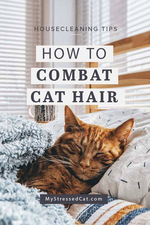 How to combat cat hair