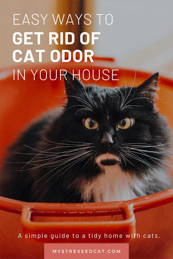 get rid of the cat odor in your house