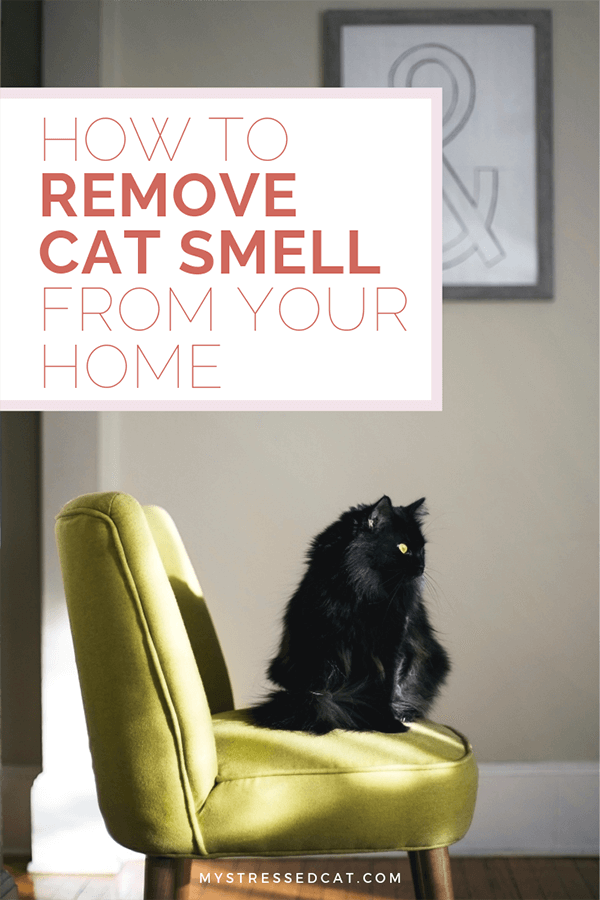 How to remove cat smell from your home