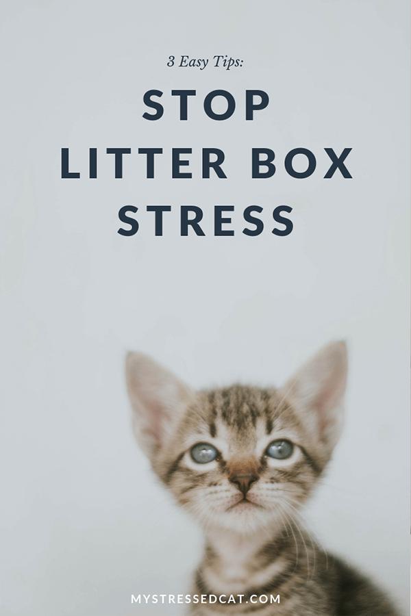 stop litter box stress