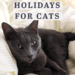 7 pet holidays for cats in June