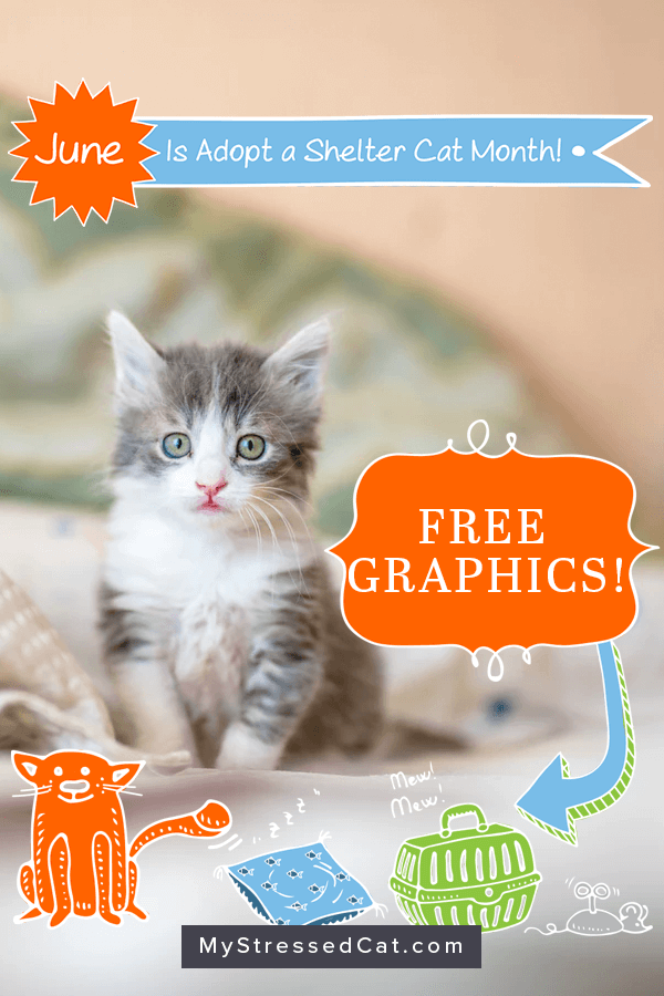 Adopt a shelter cat month. Animal Shelters are flooded with newborn kittens during the month of June. Download free graphics to promote adoptable kittens in your area.