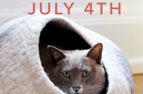 tips to keep your cat calm on july 4th weekend