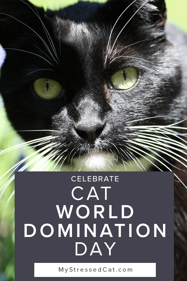 Anyone who lives with a cat already knows they're constantly plotting to take over the world. And resistance is futile. Celebrate Cat World Domination Day in June