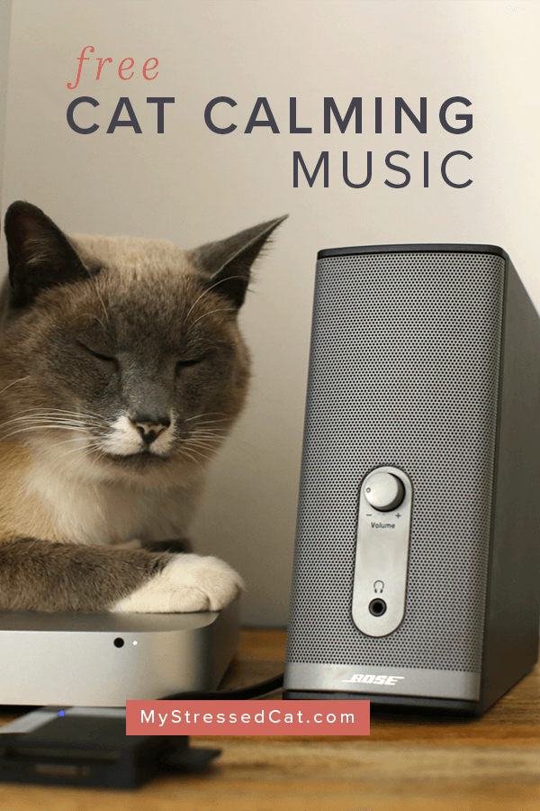 Free Cat Calming Music