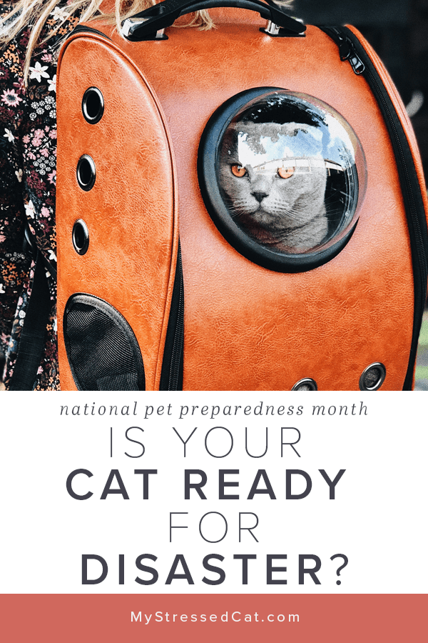 national pet preparedness month - is your cat included in your family emergency plan?