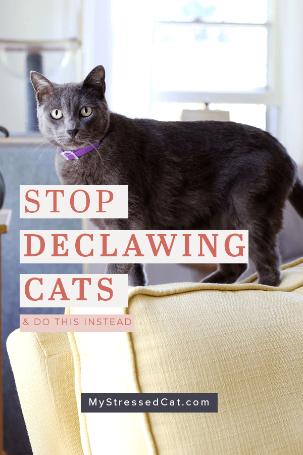 Stop declawing cats and do this instead