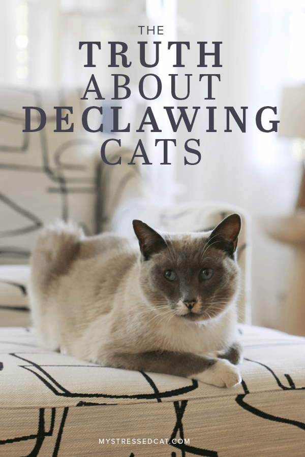 The Truth About Declawing Cats