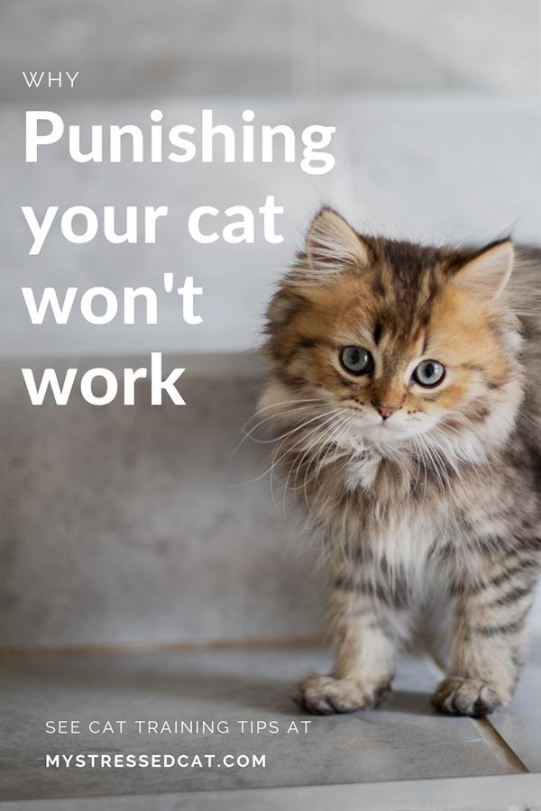 why punishing your cat won't work