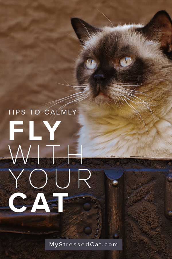 How to calmly fly with your cat