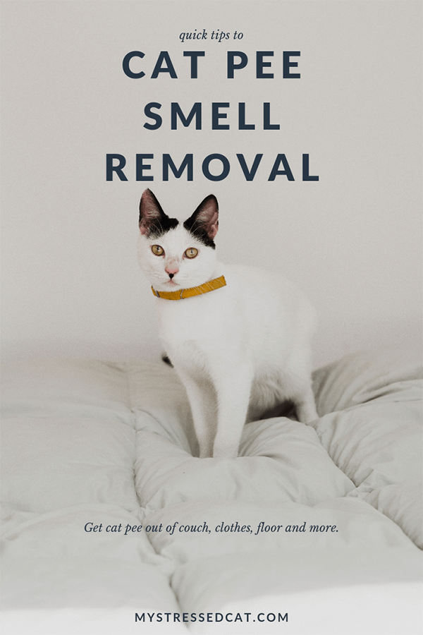 cat pee smell removal