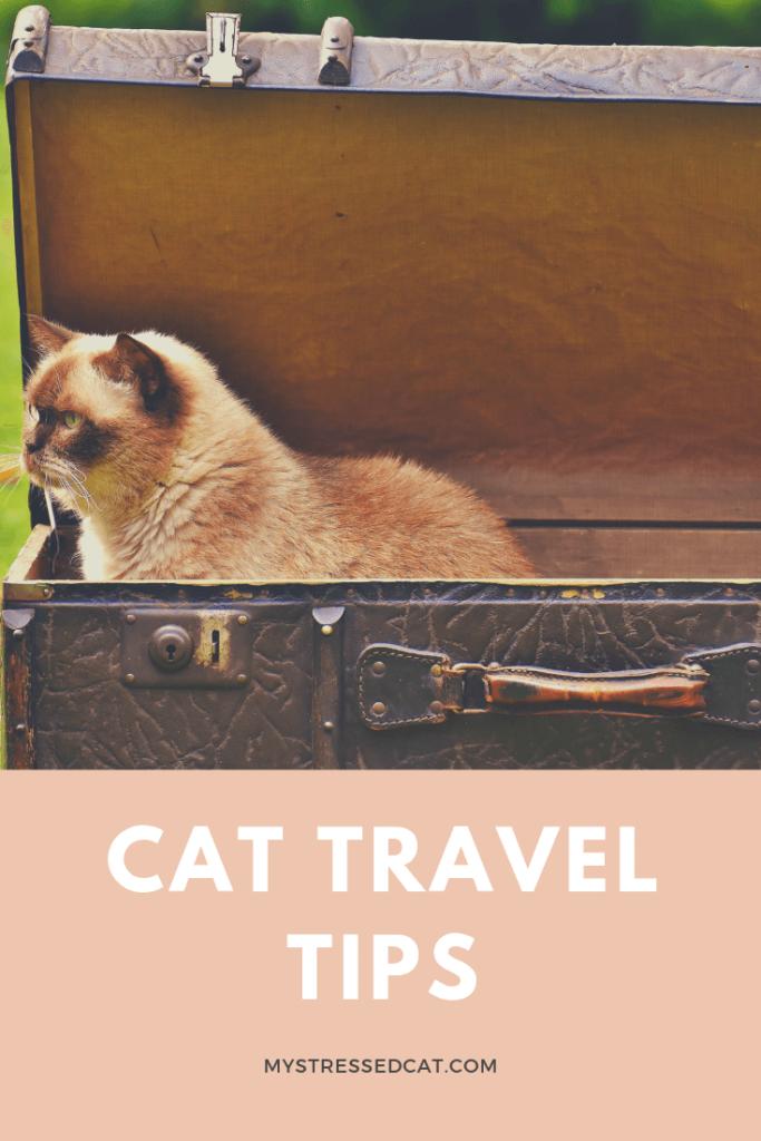 cat travel tips