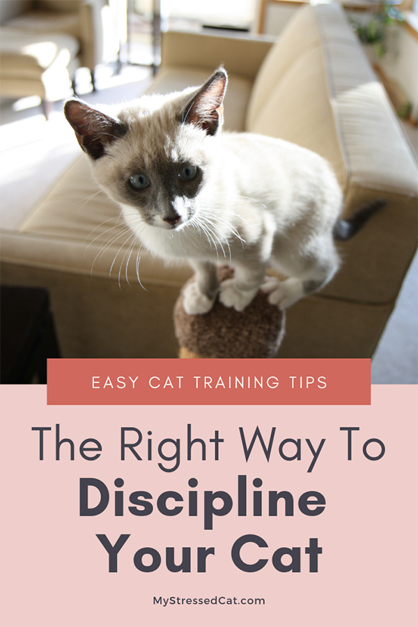 The right way to discipline your cat