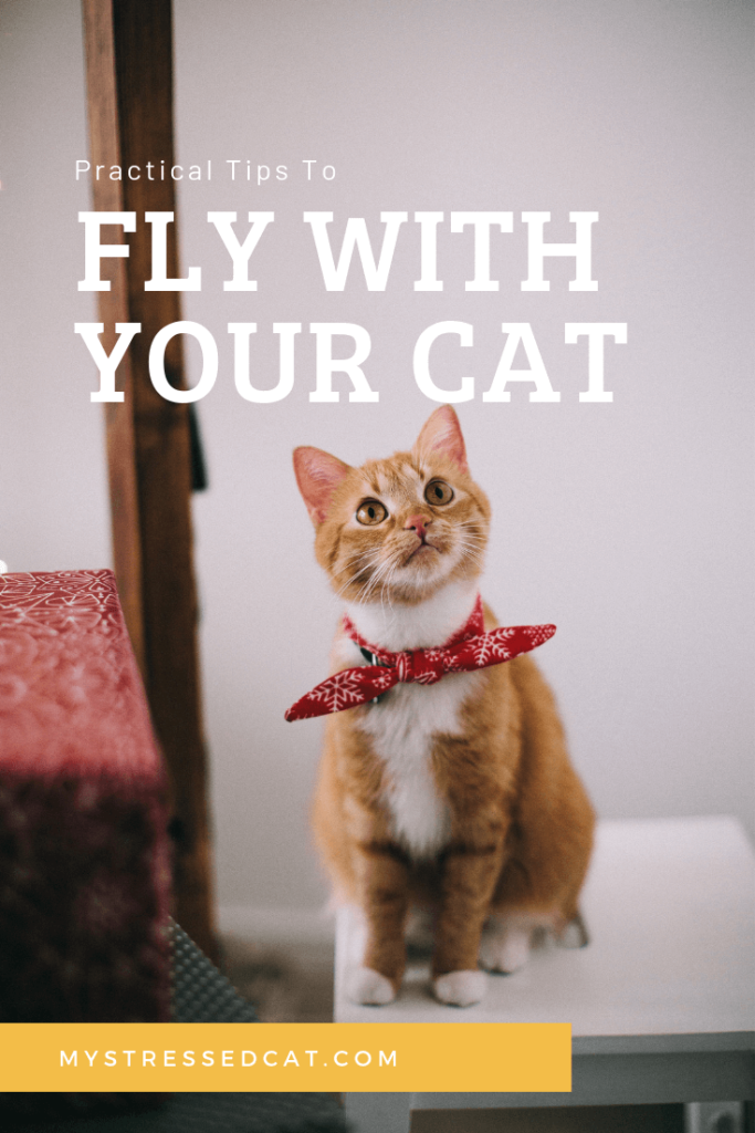 Practical Tips to Fly With Your Cat