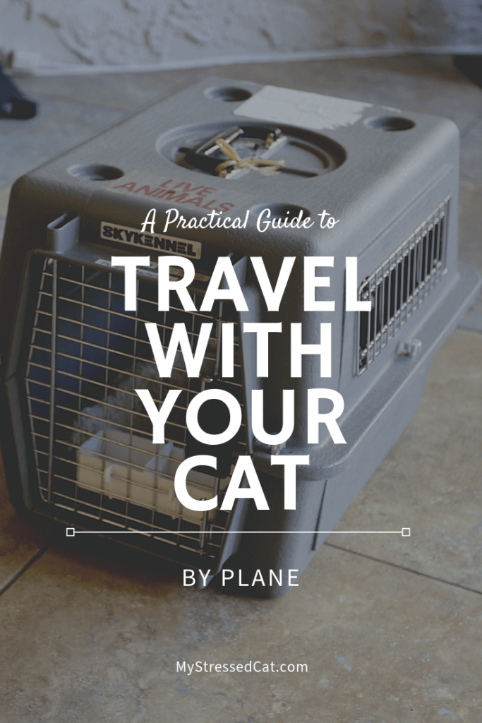 A practical guide to travel with your cat by plane