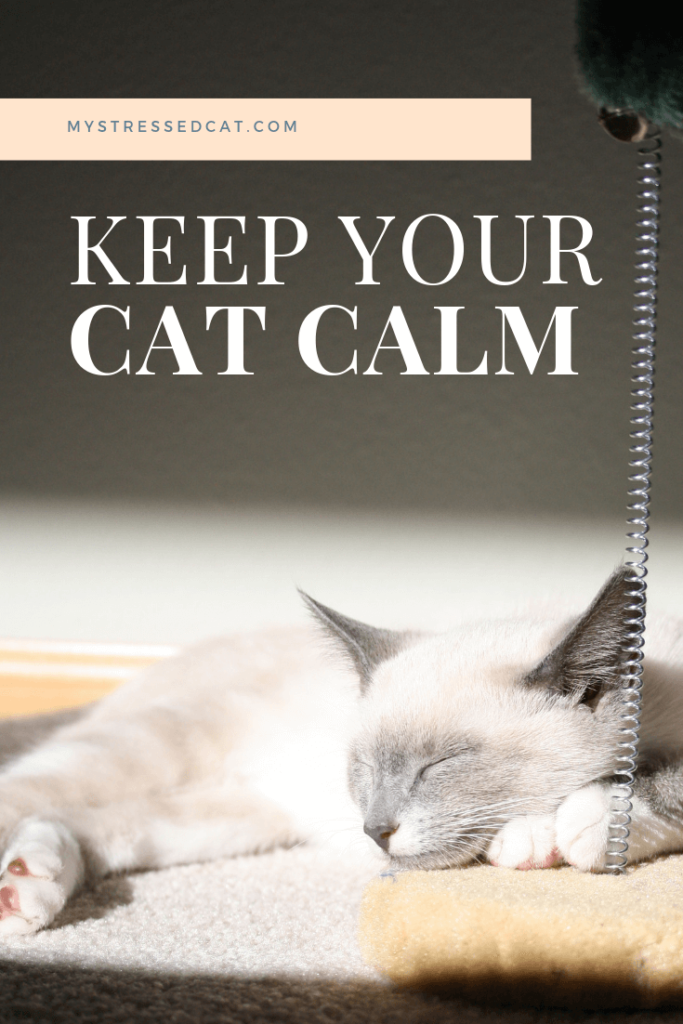 7 ways to keep your cat calm with off the shelf remedies