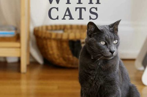 Tips to calmly move with cats