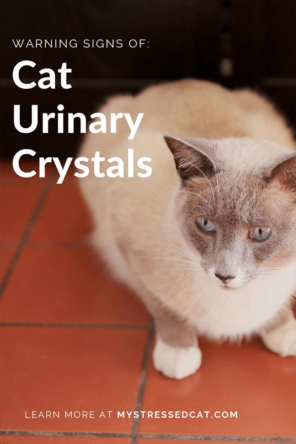 warning signs of cat urinary crystals