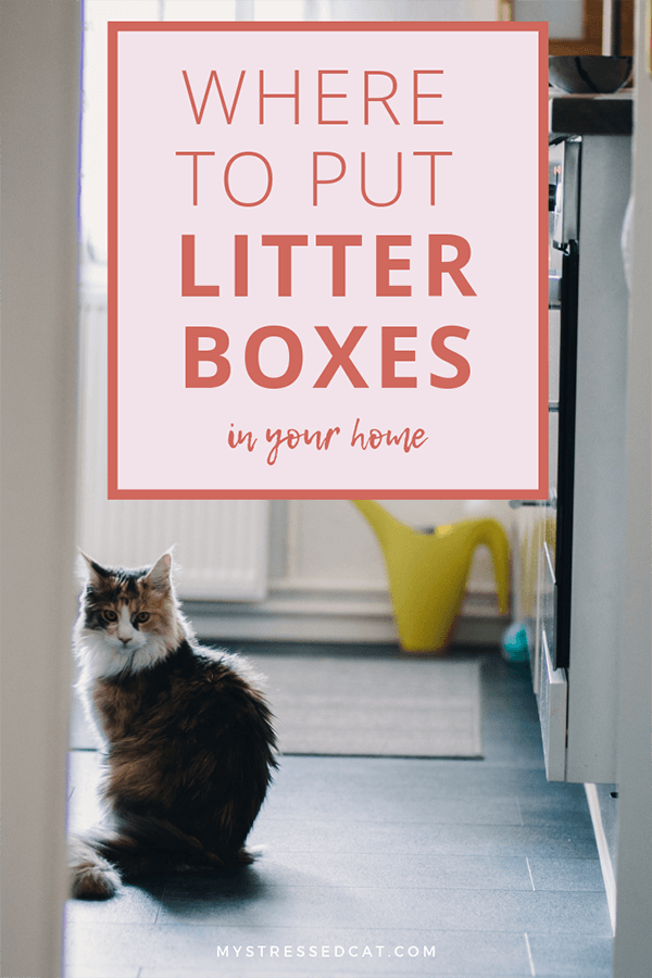 Where to put multiple litter boxes in your home