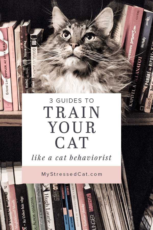 3 Guides to Train Your Cat